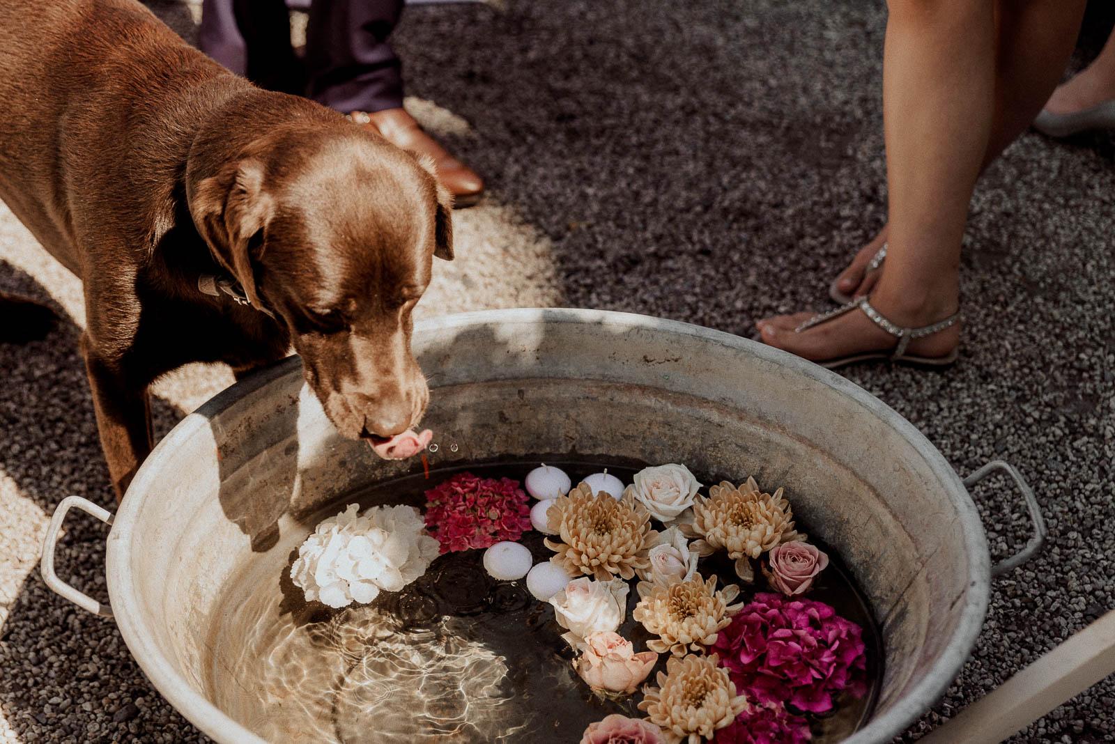 Hochzeitsdeko Blumen schwimmen in Wasser Wanne